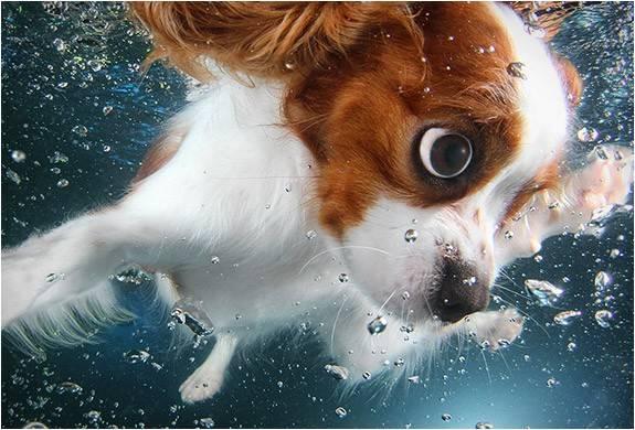 3820_1411591055_foto-filhotes-subaquaticos-seth-casteel-underwater-puppies-7.jpg - - Imagem - 7