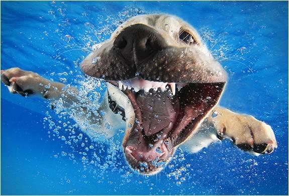 3820_1411591071_foto-filhotes-subaquaticos-seth-casteel-underwater-puppies-8.jpg - - Imagem - 8