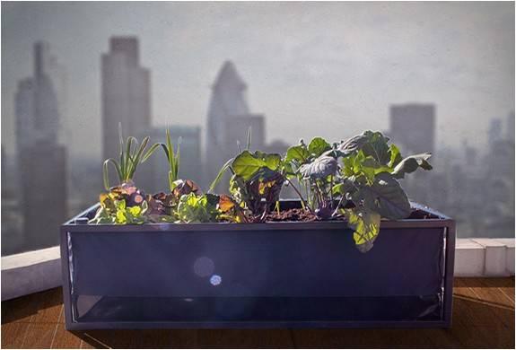 4206_1424931603_agricultura-urbana-noocity-growbed-9.jpg - - Imagem - 9
