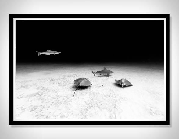 Cartazes - Impressões em Preto e Branco de Christian Vizl - Ocean Prints - Imagem - 4