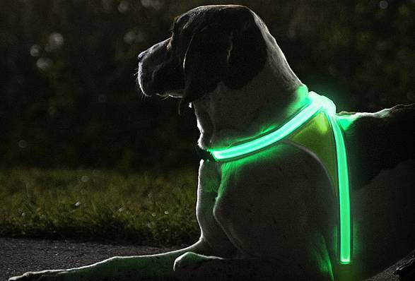 Colete LightHound para cães | Noxgear - Imagem - 2