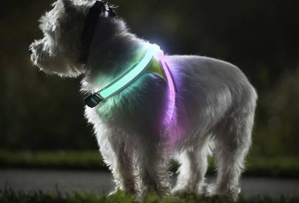 Colete LightHound para cães | Noxgear - Imagem - 3