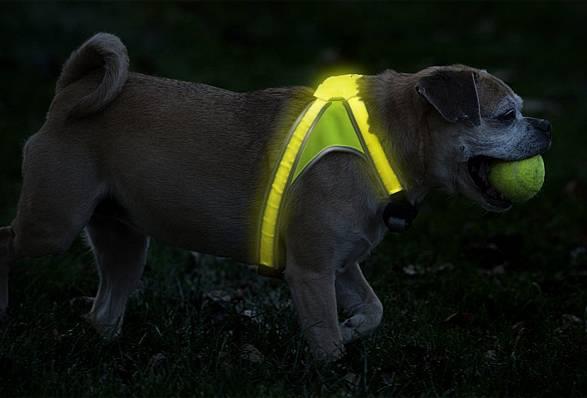 Colete LightHound para cães | Noxgear - Imagem - 4