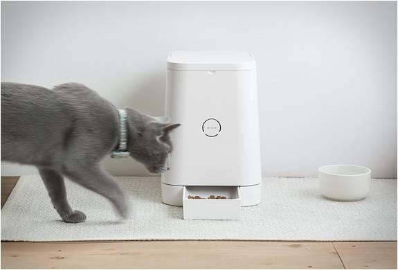 Alimentador Automático para Animais - Petly - Imagem - 2