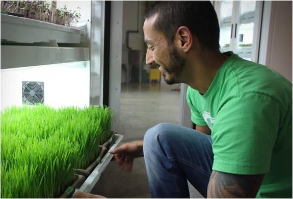 Cultivador Urbano | Plantação Urbana - Imagem - 4