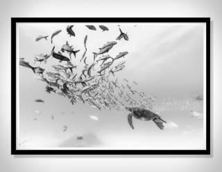 Cartazes - Impressões em Preto e Branco de Christian Vizl - Ocean Prints - Imagem - 3