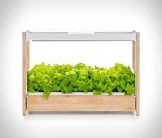 Como fazer uma horta em casa - CLICK & GROW 25 - Imagem - 4