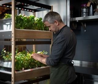 Como fazer uma horta em casa - CLICK & GROW 25 - Imagem - 2