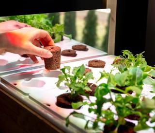 Como fazer uma horta em casa - CLICK & GROW 25 - Imagem - 5