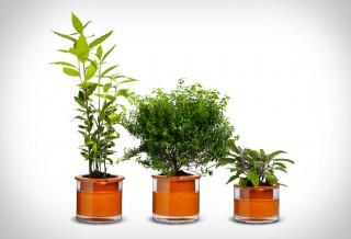 Vaso de Plantas que se Rega Automaticamente - SELF WATERING POTS
