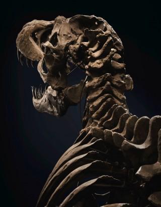 Esqueleto Stan T-Rex Skeleton - Imagem - 5