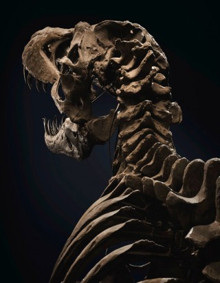 Esqueleto Stan T-Rex Skeleton - Imagem - 3