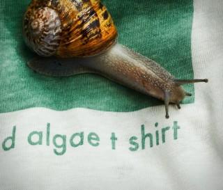 Camisa de Eucalipto e Algas - Vollebak Plant And Algae T-Shirt - Imagem - 2
